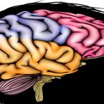 Een kijkje in het hoofd met deze 6 breinboeken